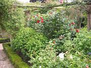 Сад роз Дэвида Остина / David Austin Roses