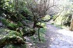 Сады и парки Крыма
