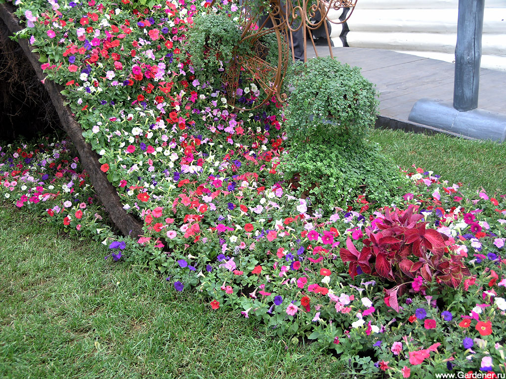 Какие сажать цветы на даче 608