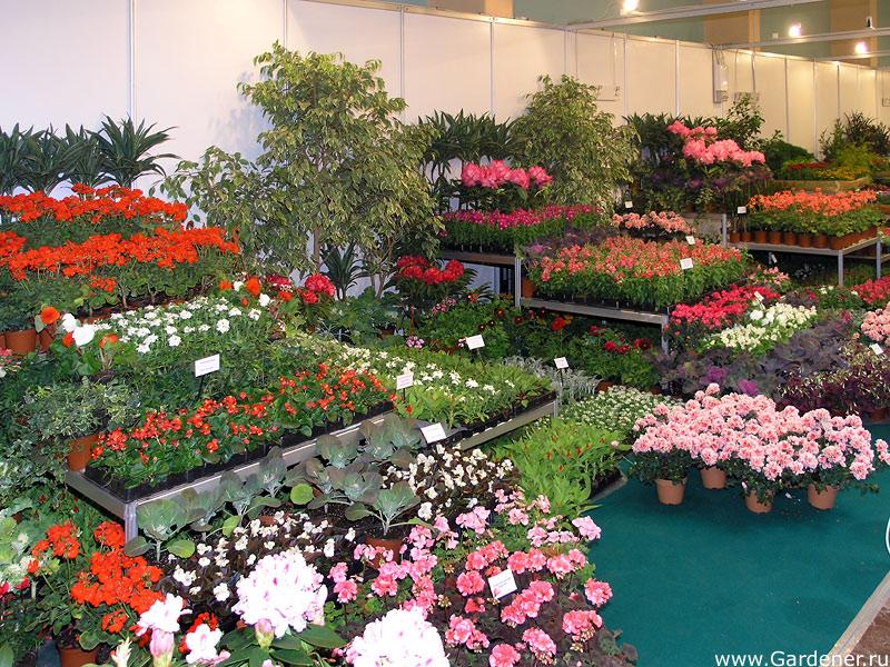 Твои дом купить цветы