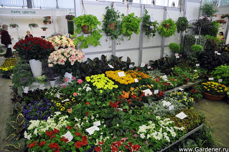 Питомник цветы рассада метро щелковская 24