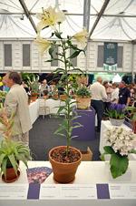Выставка цветов в Челси 2012 - Chelsea Flower Show 2012