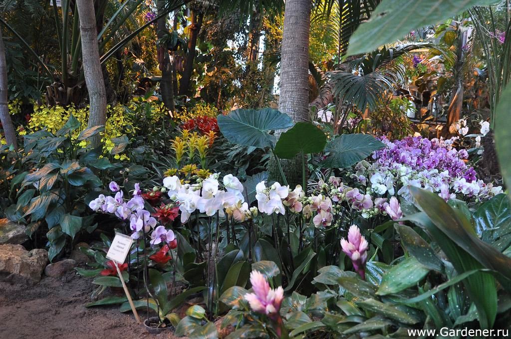 Орхидеи аптекарский огород