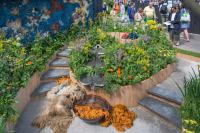 Выставка цветов в Челси 2016 - Chelsea Flower Show 2016