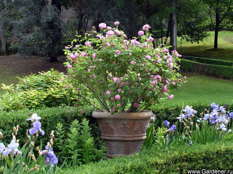http://www.gardener.ru/gallery/parki/deste/25.jpg