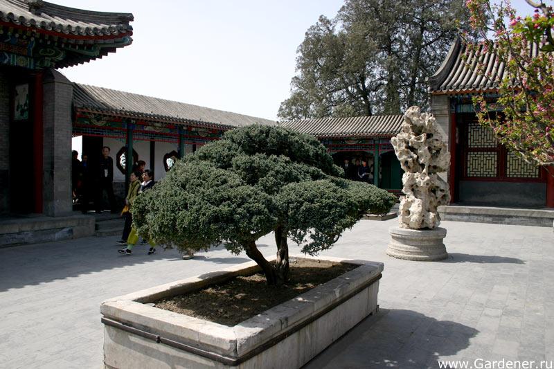 http://www.gardener.ru/gallery/parki/ih/21.jpg