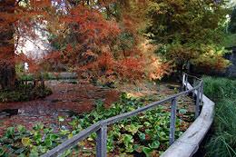Ботанический сад г. Лукка