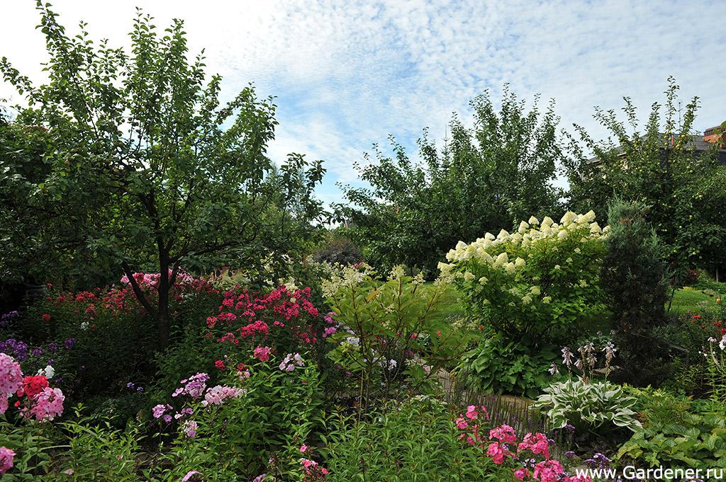дизайнерский сад марины соколовой фото марати хорошо