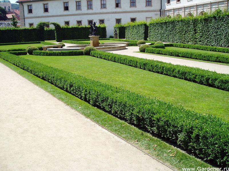 сады венеры фото