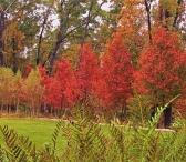 Woodland Rain Gardens