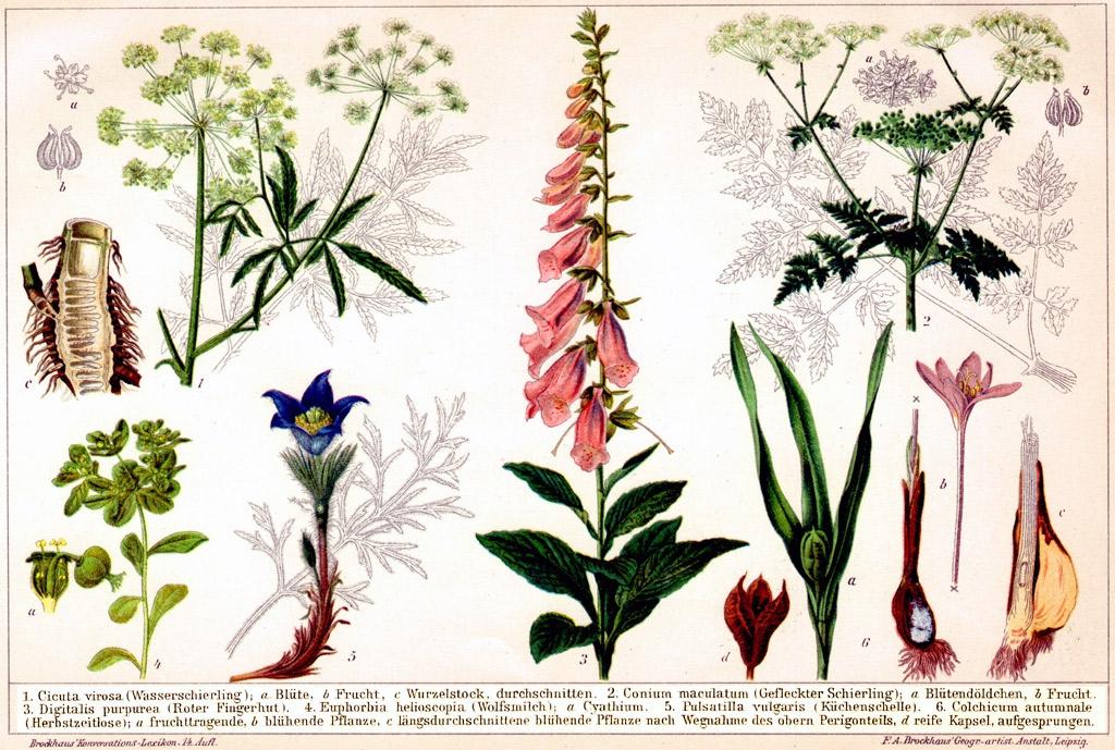 акое цветы на латыни с картинками телефон красивый
