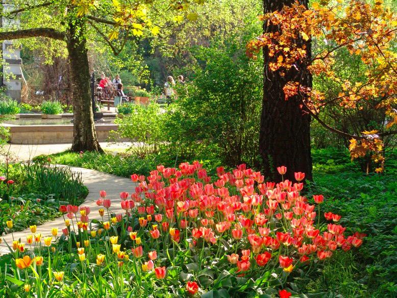 Каталог цветы в саду и огороде 53